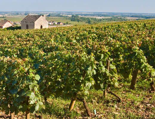 Burgundia Fine Wine