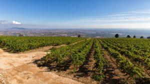 Fine Wine Wino z sycylii