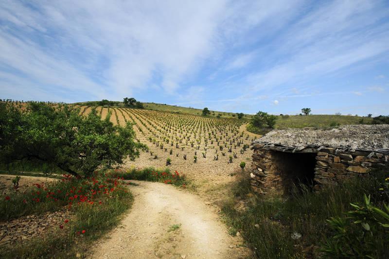 Gil Estates Family Bodega Ateca Fine Wine