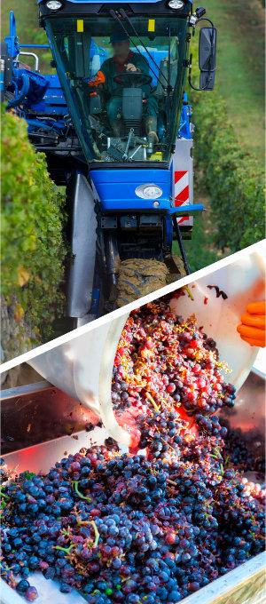praca winiarza 3 - Fine Wine