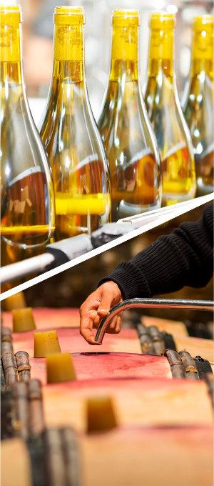 praca winiarza 2 - Fine Wine