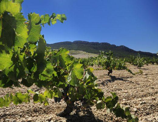 Fine Wine Juan Gil