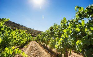 Gil Estate Family - Fine Wine