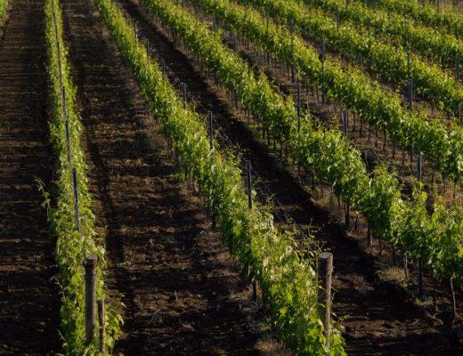Fine Wine Winiarnia Planeta Sycylia