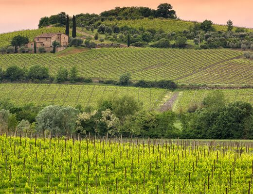 Wina z Montalcino - Fine Wine