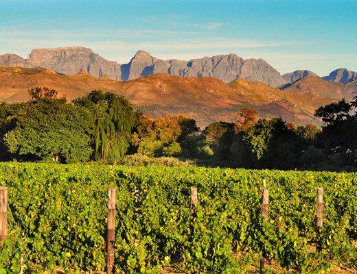 wina z RPA