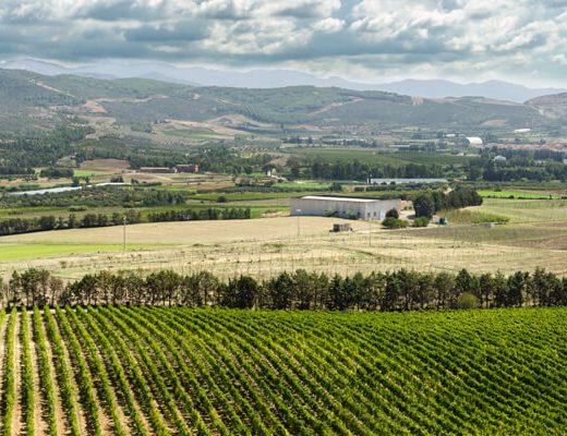 wina z Sardynii Fine Wine