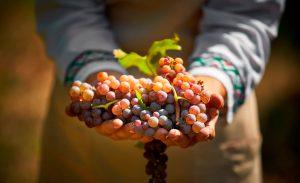 winiarstwo - Fine Wine