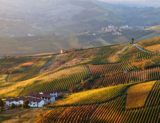 Winnice Piedmont