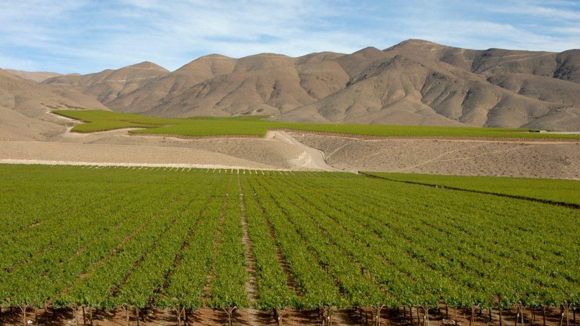 Wino z Chile Andy Fine Wine