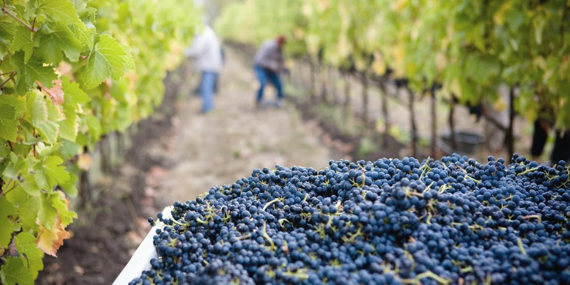 Wina ekologiczne - Fine Wine