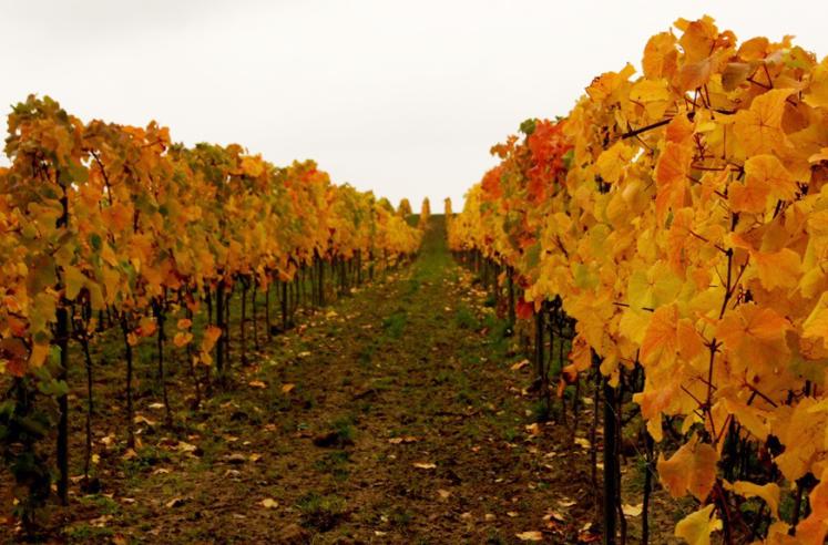 Winnica Turnau - Fine Wine