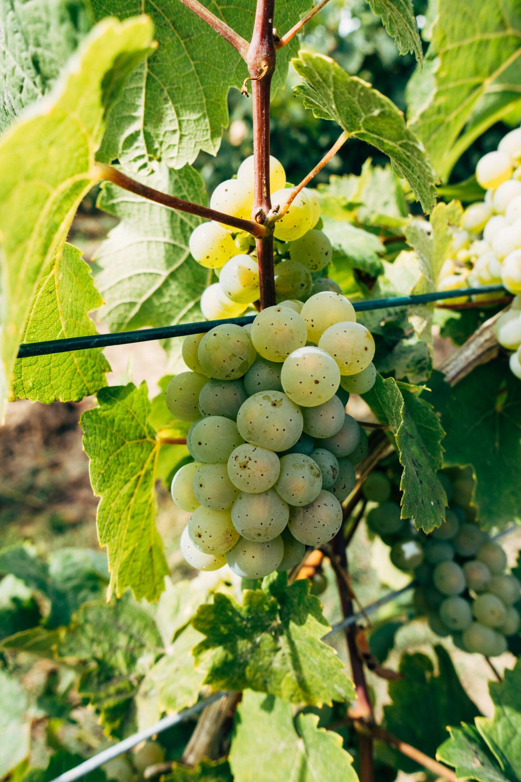 wino hiszpańskie - Fine Wine